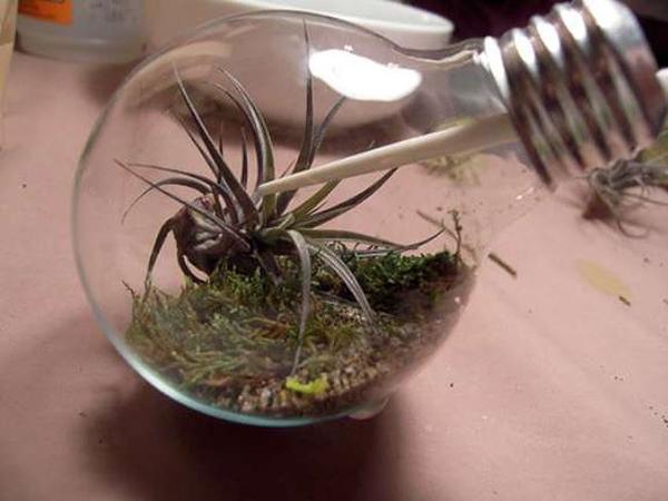 bulb 4