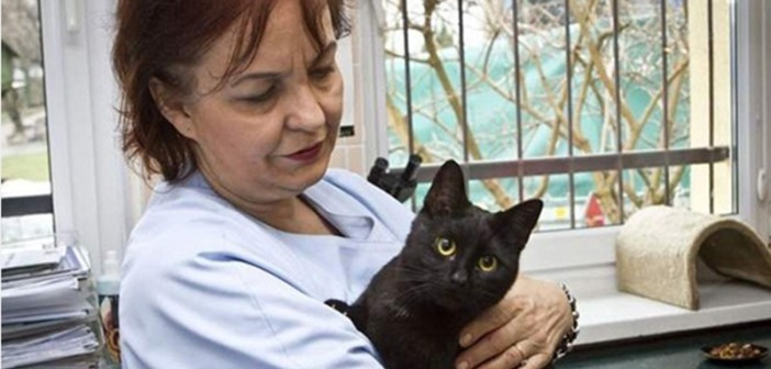 amazing-cat-nurse