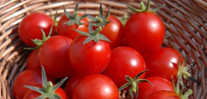 tomatoes-basket
