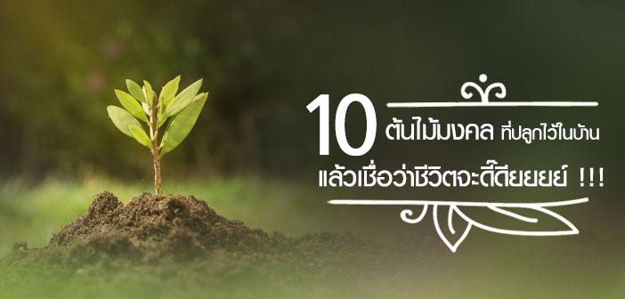 10 ต้นไม้มงคล ที่ปลูกไว้ในบ้านแล้วเชื่อว่าชีวิตจะดี๊ดียยยย์ !!!
